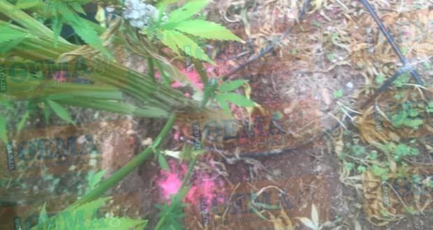 Εικόνες Αμαζονίου -Φυτεία χασίς μέσα στο «On the Rocks» του γνωστού τραγουδιστή Αντύπα