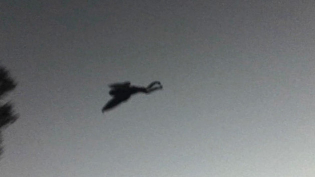 mothman3_631_355