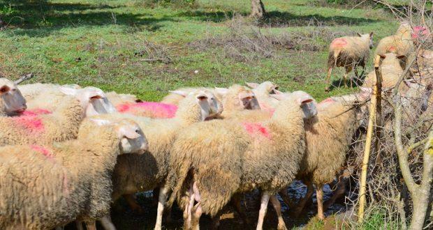 Ένωση Αγρινίου: Χαμηλή προσέλευση για την απογραφή ζωικού κεφαλαίου