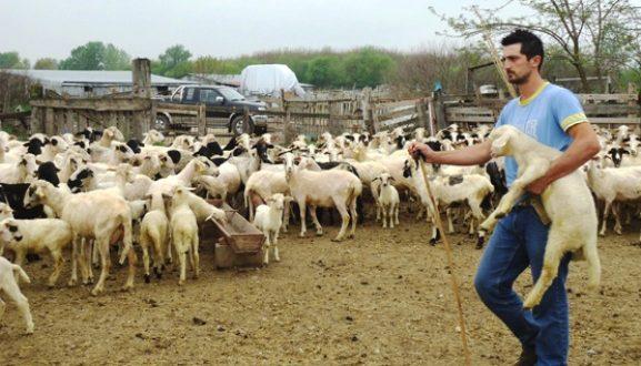 SOS από τους κτηνοτρόφους της Ορεινής Τριχωνίδας – Αγγέλες λύκων αποδεκατίζουν τα κοπάδια τους