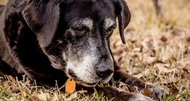 42χρονη, στο Μεσολόγγι, είχε δεμένο σκύλο με αλυσίδα σε συρματόσκοινο, χωρίς φαγητό και νερό