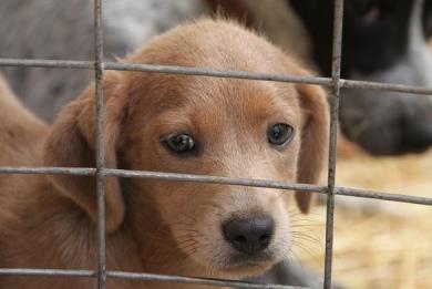 Ανακοίνωση-Απόφαση του Αντιδημάρχου Μεσολογγίου, Σπ. Καρβέλη: «Καταδικαστέα η θανάτωση αδέσποτων ζώων»
