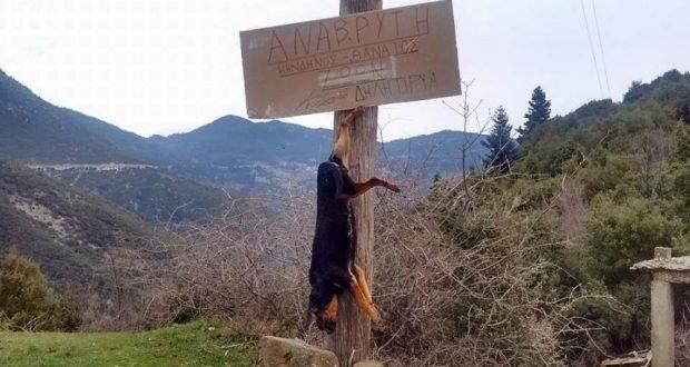 Σκότωσαν και κάρφωσαν επιδεικτικά σκυλί πάνω σε κολόνα που έγραφε «Προσοχή Δηλητήριο»