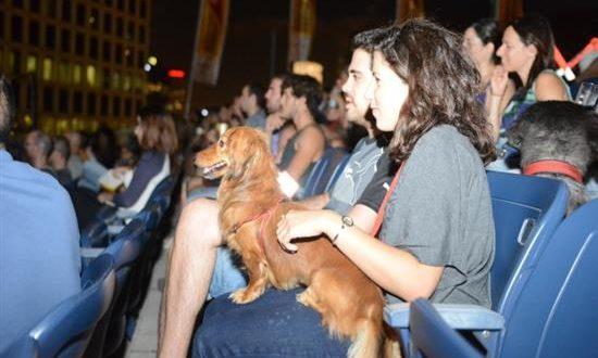 «Ντίτζι Ντογκ»: Η πρώτη ψηφιακή υπηρεσία για σκύλους
