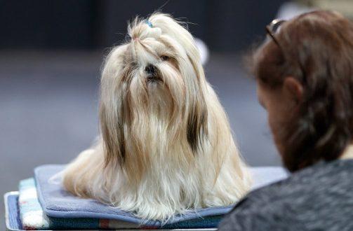 9 απίστευτα πράγματα που διαισθάνονται τα σκυλιά!
