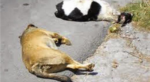 Μεσολόγγι: Δικογραφία εις βάρος αγνώστου για παράβαση περί προστασίας ζώων