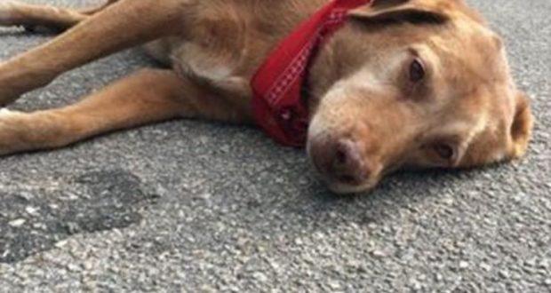 Αναβρύτη Ναυπακτίας: Παράβαση του Νόμου περί προστασίας ζώων συντροφιάς