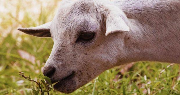 Ένωση Αγρινίου: Οδηγίες για τη σωστή διατροφή των ζώων