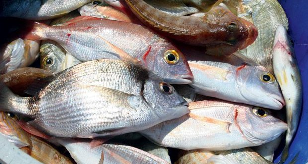 Μεσολόγγι: Άγνωστος παρίστανε τον πρόεδρο του ΕΦΕΤ και καπάρωσε 59 κιλά ψάρια χωρίς να πληρώσει