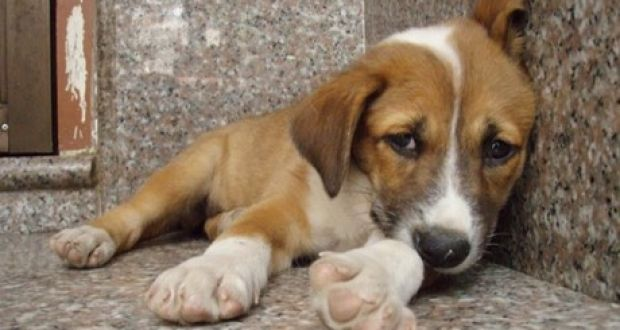 Αιτ/νία: Χρηματοδότηση για καταφύγια αδέσποτων ζώων συντροφιάς (Πίνακες)