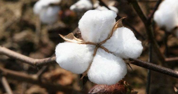 Ένωση Αγρινίου: Φυτοπροστασία στις βαμβακοκαλλιέργειες της Αιτωλοακαρνανίας