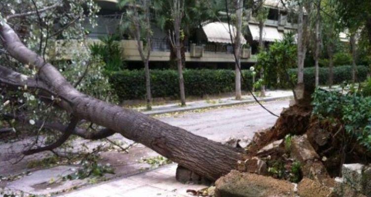 Πτώση δένδρων στο Δασύλλιο του Αγ. Χριστοφόρου – Προβλήματα στην ηλεκτροδότηση (Φωτό)