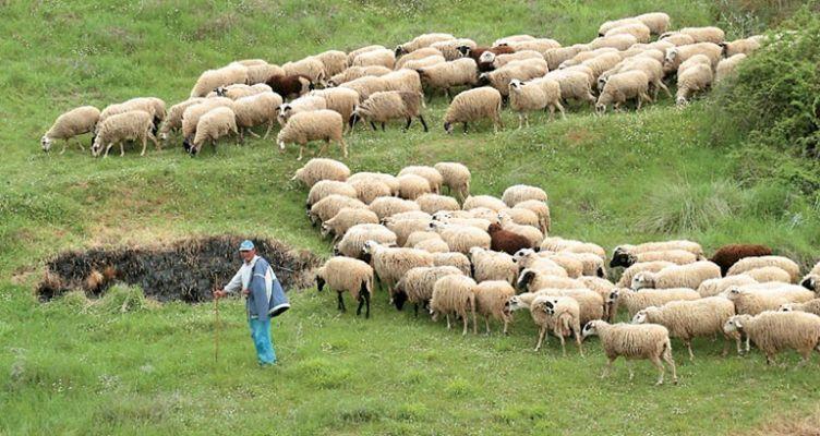 Ένωση Αγρινίου: Ολοκληρώνεται η απογραφή ζωικού κεφαλαίου