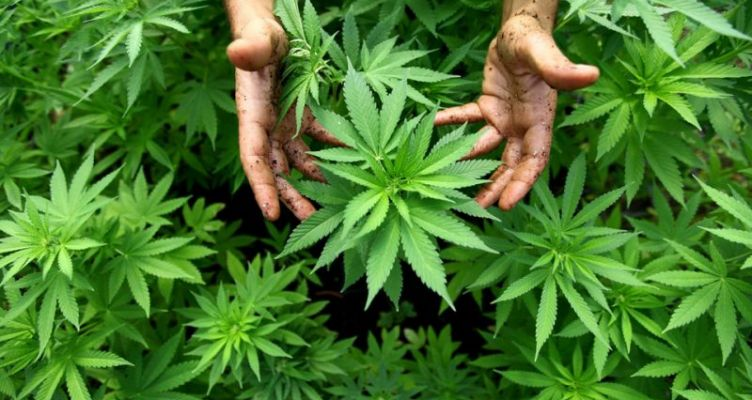 Αγρίνιο: Σύλληψη 33χρονου για καλλιέργεια και κατοχή ναρκωτικών και παράβαση του Τελωνειακού Κώδικα