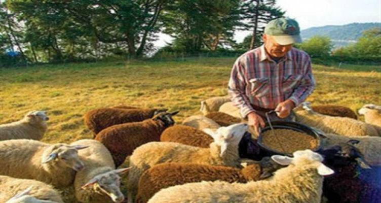 Πληρώνονται 29εκ. ευρώ σε δικαιούχους προγράμματος Βιολογικής Κτηνοτροφίας