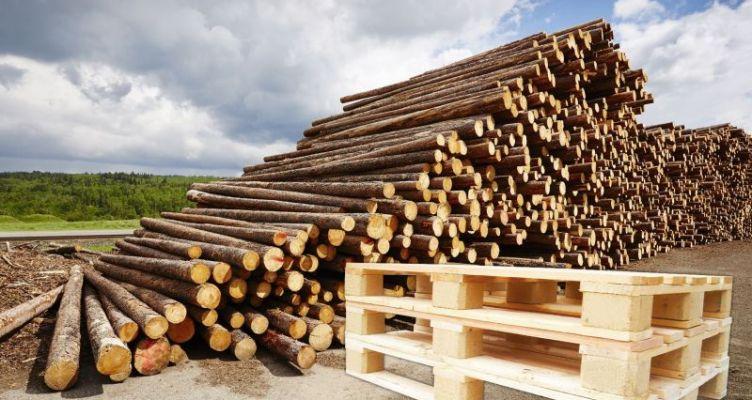 Κατάσχεση φορτηγού και μεγάλης ποσότητας ξυλείας στην Αμφιλοχία