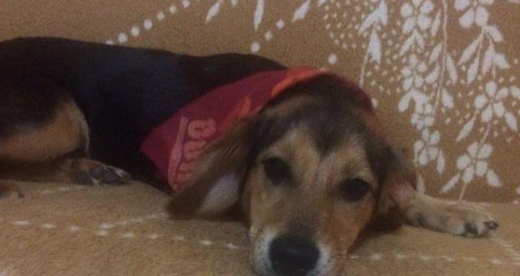 Ποινή φυλάκισης και χρηματική ποινή στους τρεις που κακοποίησαν σκύλο σε στρατιωτικό φυλάκιο
