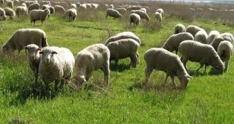 Δωρεάν εκπαίδευση νέων κτηνοτρόφων από το πρόγραμμα  «Νέα Γεωργία για τη Νέα Γενιά»