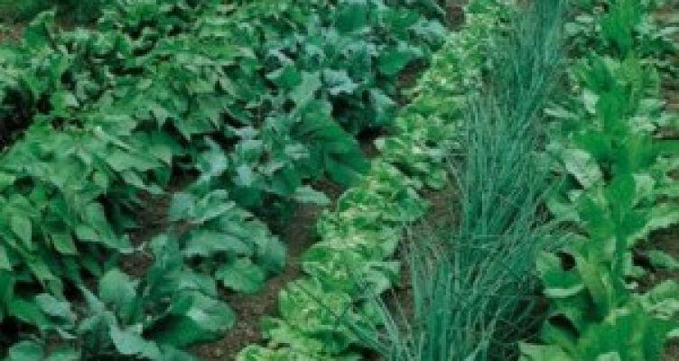 Δήμος Αγρινίου: Ξεκινούν οι ανοιξιάτικες καλλιέργειες στο Δημοτικό Λαχανόκηπο