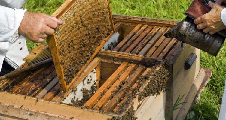 Μεσολόγγι: Τακτική Γενική Συνέλευση για τον Μελισσοκομικό Σύλλογο