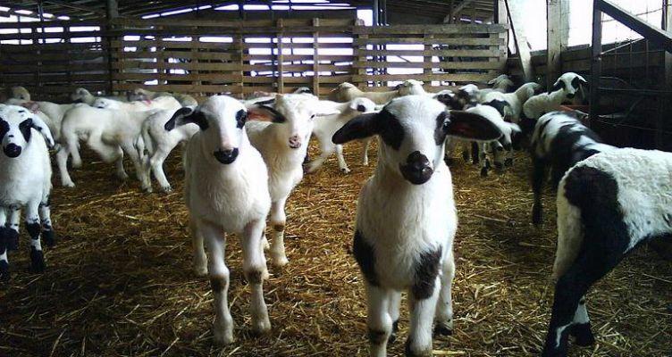 Πληρωμές για την Βιολογική Κτηνοτροφία στην Αιτωλοακαρνανία