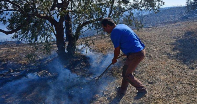 Σε ύφεση τα πύρινα μέτωπα στην Ηλεία – Μειωμένη η ένταση των ανέμων (Βίντεο)