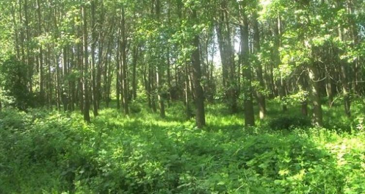 Στην τελική ευθεία η διαβούλευση για την Εθνική Στρατηγική για τα Δάση