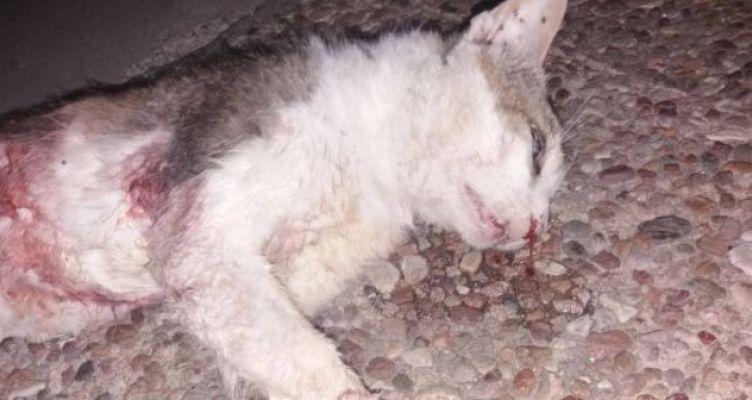 Βόνιτσα: Άγνωστοι θανάτωσαν μια αδέσποτη γάτα – Σχηματίστηκε δικογραφία