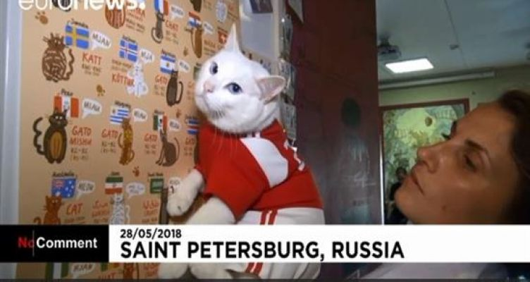 Ξεχάστε το χταπόδι-Πυθία – Έρχεται ο γάτος-μάντης που θα προβλέπει τους νικητές του Μουντιάλ (Βίντεο)