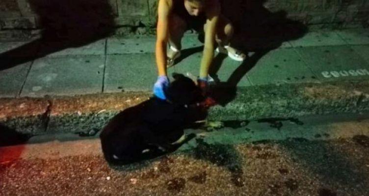 Σκυλίτσα ξεψύχησε από φόλα στο Συντριβάνι – Απάνθρωπες συμπεριφορές στο κέντρο του Αγρινίου! (Φωτό)