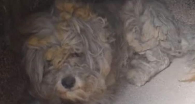 Βρέθηκε ζωντανό σκυλάκι μέσα στον φούρνο καμένου σπιτιού στο Μάτι (Βίντεο)
