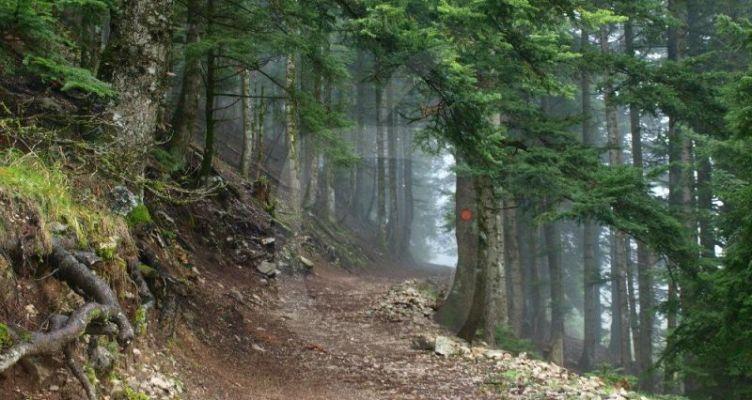 Αιτωλοακαρνανία: Απαγόρευση κυκλοφορίας οχημάτων στα περιαστικά δάση