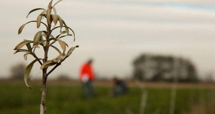 Η τεχνολογία για τη μείωση της θερμοκρασίας της γης θα βλάψει σημαντικά τη γεωργία
