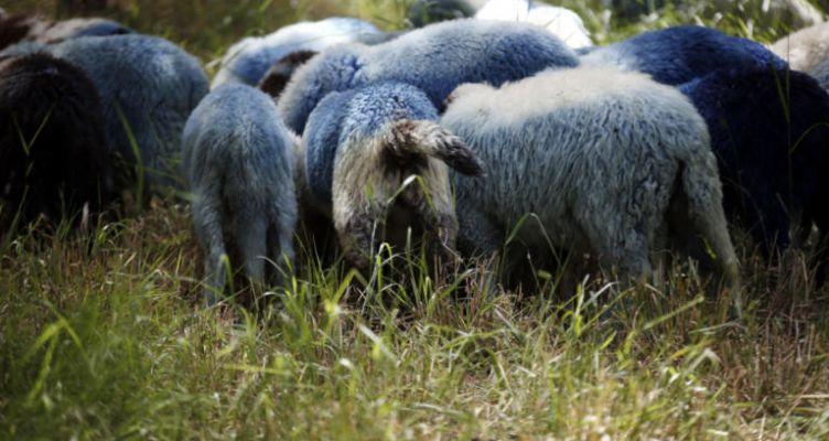 Αγνοούμενος βοσκός που βγήκε να μαζέψει τα ζώα του – Τα ίχνη του χάθηκαν μυστηριωδώς!