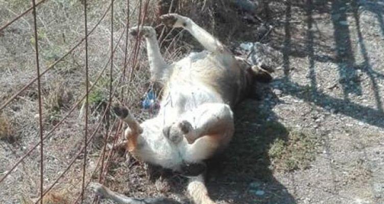 Σκληρές εικόνες έξω από το Δ.Α.Κ. Αγρινίου – Πέταξαν τα νεκρά σκυλιά στο δρόμο (Φωτό)