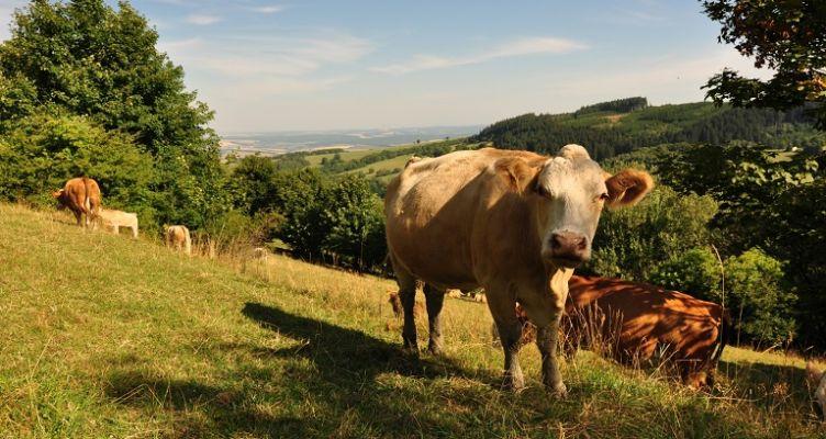 Ένωση Αγρινίου: Κυρωμένοι δασικοί χάρτες και καταβολή ενισχύσεων