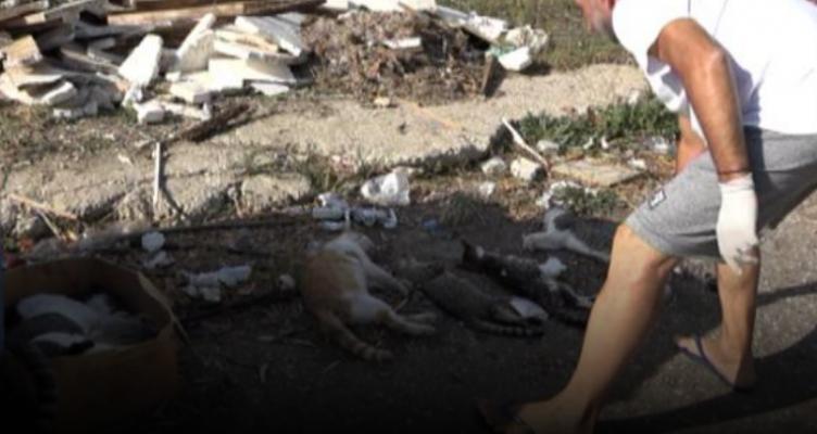 Πύργος: «Θέρισαν» με φόλες 17 γατάκια – Έγκλημα εκ προ μελέτης