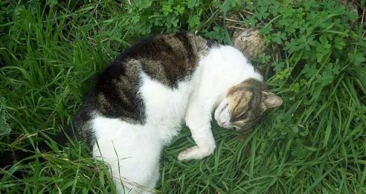 Καταγγελία: Aσυνείδητοι σκοτώνουν γάτες στην Χούνη Αγρινίου