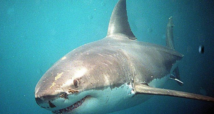 Καρχαρίας κατασπάραξε Έλληνα ομογενή στην Αυστραλία (Φωτό)