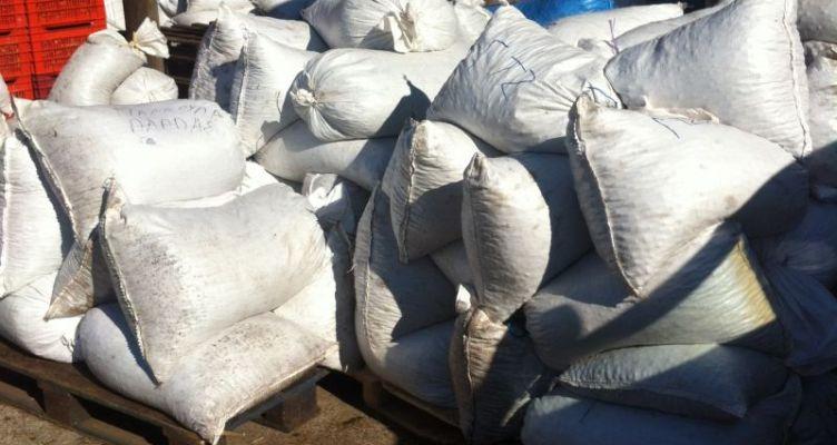 Μάζεμα ελιάς στο Βασιλόπουλο Ξηρομέρου (Φωτό)