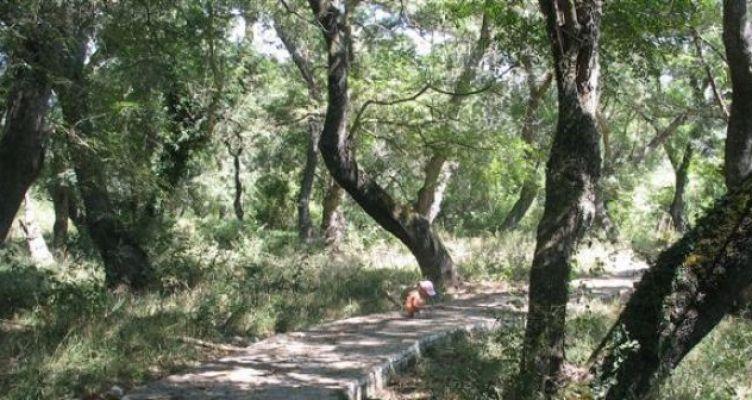 Οινιάδες Μεσολογγίου: Το σπάνιο δάσος του Φράξου (Φωτό)