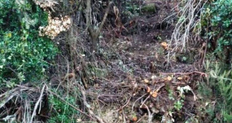 Ποταμούλα: Πέθανε μπροστά στην μητέρα του την ώρα που έκοβε ξύλα (Φωτό)
