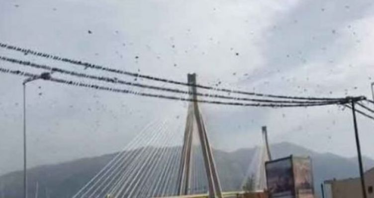 Χιλιάδες ψαρόνια στο Αντίρριο – Εντυπωσιακοί σχηματισμοί στη Γέφυρα (Βίντεο)