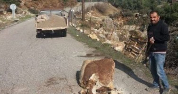 Ξηρόμερο: Έπεσε βράχος στο δρόμο για τα Βλυζιανά (Φωτό)