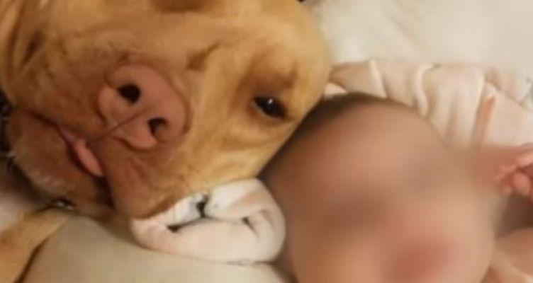 Ναύπακτος: Φρικιαστικό περιστατικό επίθεσης σκύλου σε βρέφος