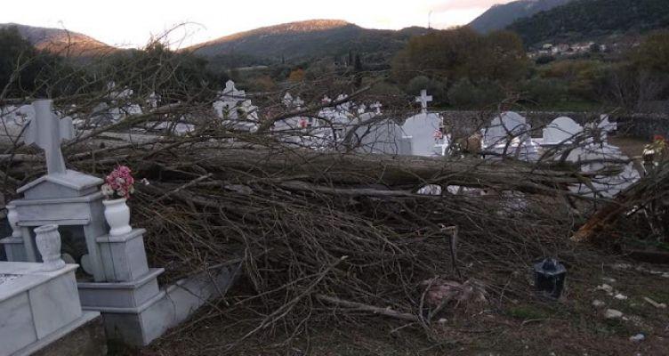 Ξεριζώθηκε δέντρο στο νεκροταφείο Βασιλόπουλο Ξηρομέρου – Υλικές ζημιές σε τάφους (Φωτό)