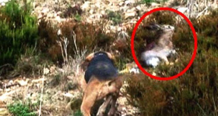 Αιτωλ/νία: Συλλήψεις για παράνομο κυνήγι λαγού σταΑκαρνανικά Όρη