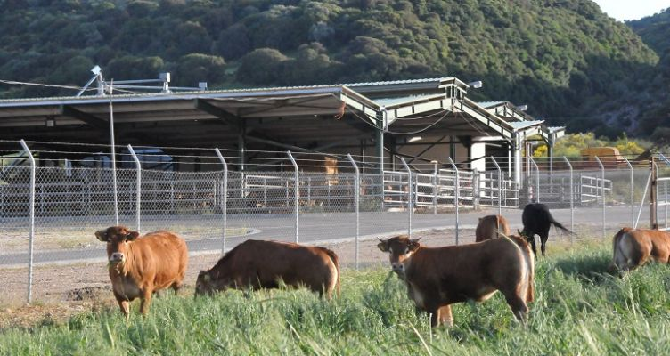 Ένωση Αγρινίου-Νομιμοποίηση κτηνοτροφικών εγκαταστάσεων: Παράταση μέχρι 30 Ιουνίου 2019