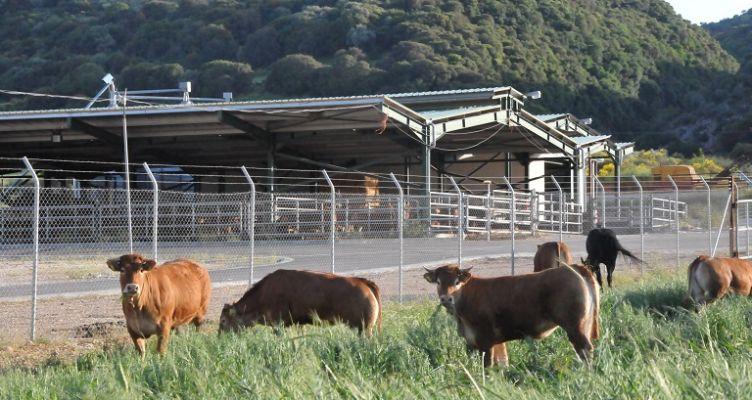 Ένωση Αγρινίου: Παράταση στη νομιμοποίηση κτηνοτροφικών εγκαταστάσεων