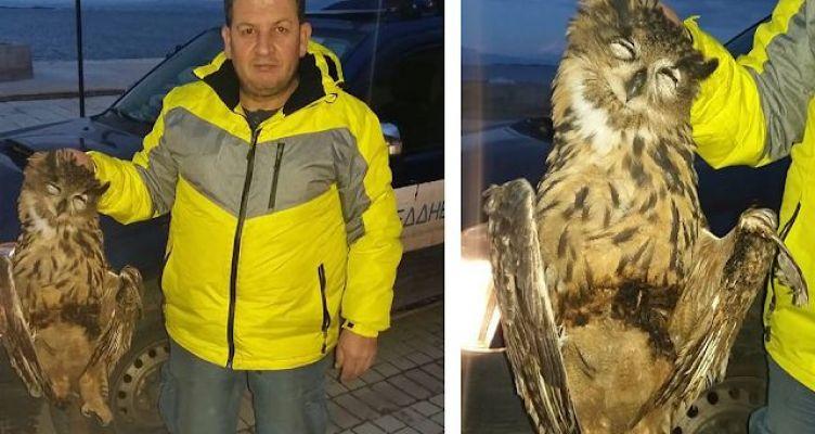 Διακοπή ηλεκτροδότησης στη Βόνιτσα μετά από πτώση πτηνού (μπούφου)